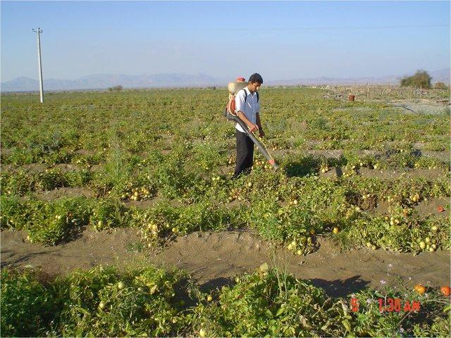 معافیت مالیاتی فرآیندهای تولیدی و خدماتی محصولات کشاورزی، پیش بینی الگوی کشت در برنامه ششم